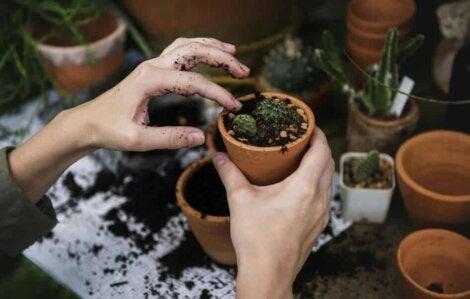 Des plantes en pot.