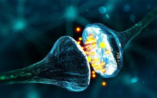 Synapse neuronale.