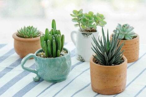 Les différents types de succulentes.