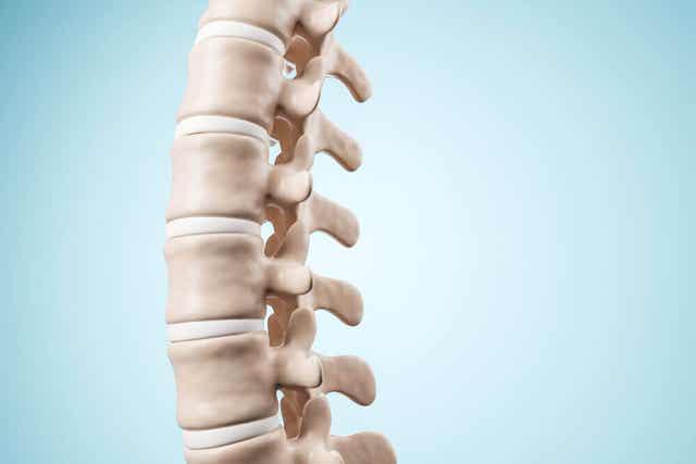 Une colonne vertébrale.