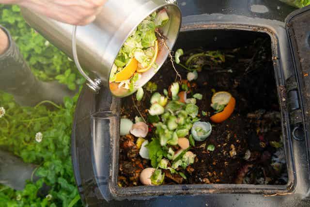 Mettre les restes dans le compost.