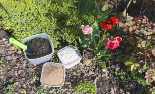 Perlite pour plantes : utilité et usage