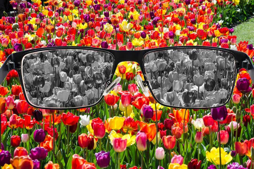 Des lunettes pour voir le monde en couleurs.