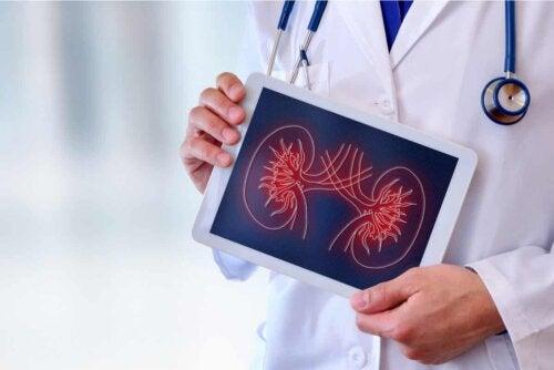 Un médecin qui montre une image des reins.