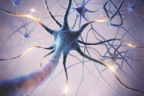 Connexions neuronales.