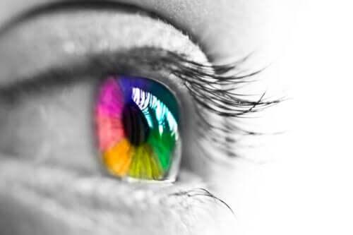 Comment nos yeux perçoivent-ils les couleurs ?