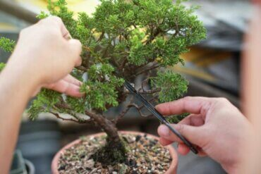 Apprendre à fabriquer et à entretenir des bonsaïs