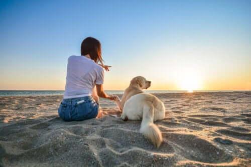 14 conseils à suivre si vous emmenez votre chien à la plage