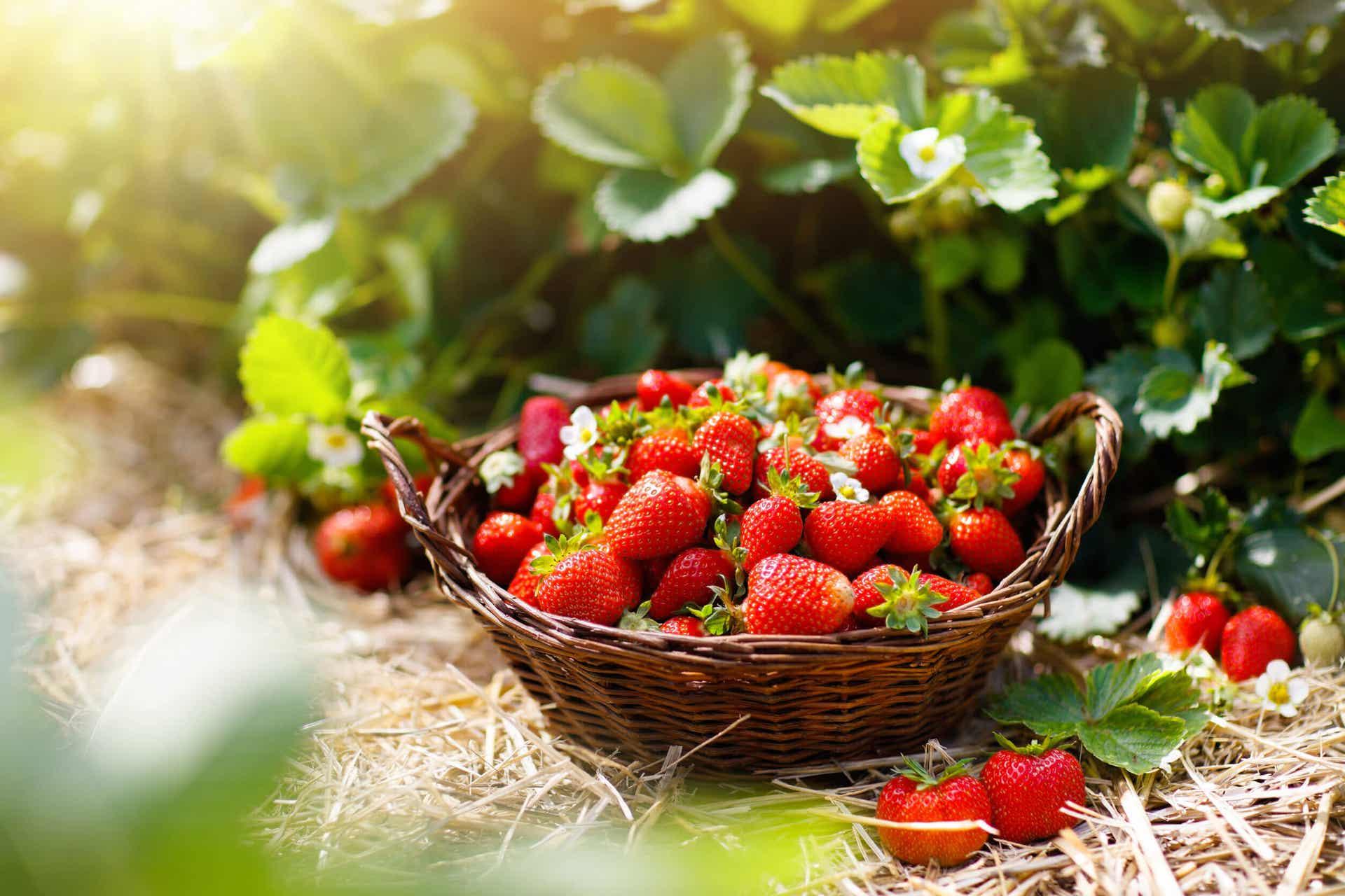 Déshydrater des fruits