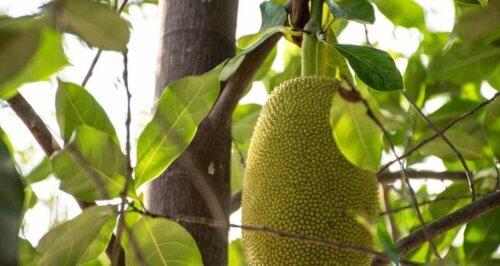 Un fruit exotique.
