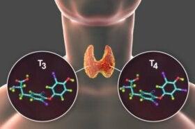 Thyroxine : qu'est-ce que c'est et quelles sont les maladies associées ?