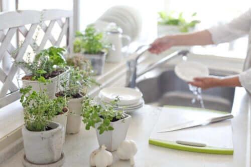 5 avantages à avoir des plantes dans la cuisine