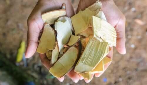 Qu'est-ce que le tongkat ali et quelle est son utilité ?