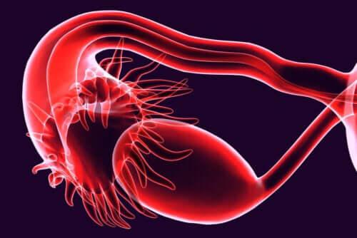 Obstruction des trompes de Fallope : quelles sont les causes ?