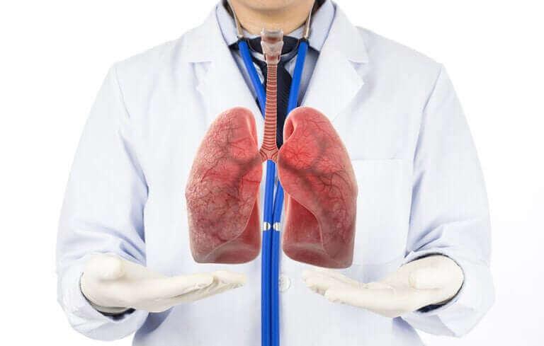 Les phases de la respiration