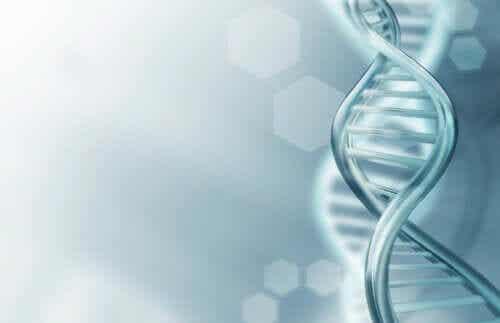 Tout ce que vous devez savoir sur l'ADN