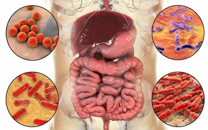 Le microbiote.