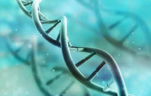 ADN et ARN.